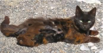 la vie sans des chats sans abri illustr 233 e par des