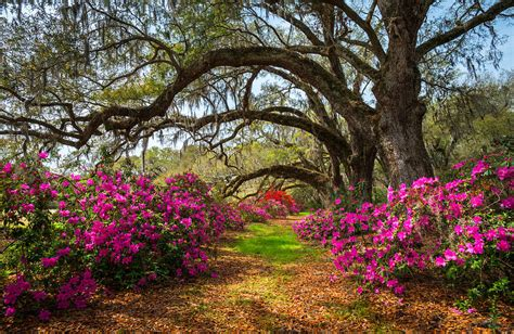 Southern Plantation Home Plans charleston sc spring flowers scenic landscape south
