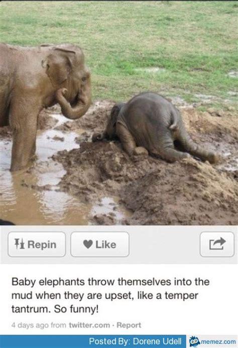 Elephant Meme - angry elephants memes com