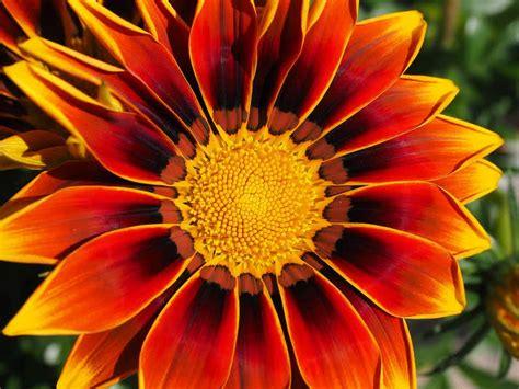 Beautiful Flower Dan Custom Nama top 10 most beautiful flowers in the world the mysterious world