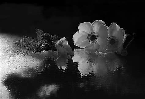 fiori bianchi fiori bianchi per te foto immagini piante fiori e