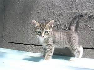 Pottery Barn Kids Sale Tabby Kitten