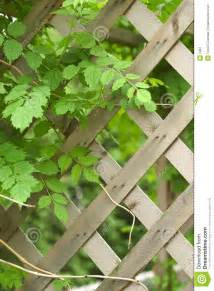 Trellis And The Vine vine and trellis stock image image 5081