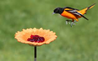 Homemade Plant Food For Cut Flowers top tips for attracting orioles to your yard birds and