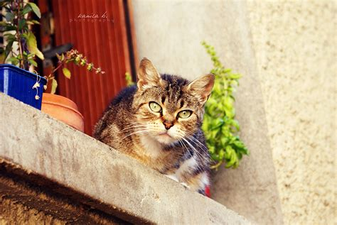 The Cat Next Door by The Cat Next Door By Kamilla B On Deviantart