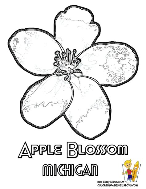 coloring pages of apple blossoms 1000 images about usa coloring pages on pinterest
