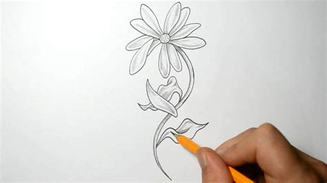 Falling Petals Drawing