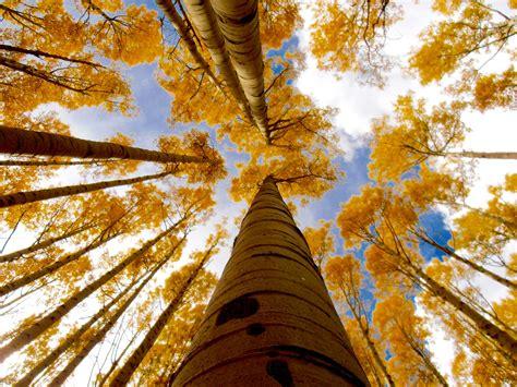 fall colors in arizona arizona fall colors