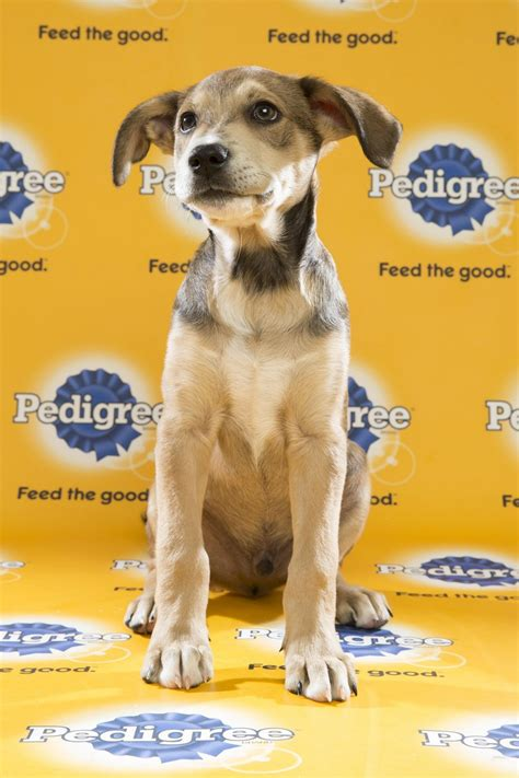 puppy bowl 2016 puppy bowl 2016 tate reel with