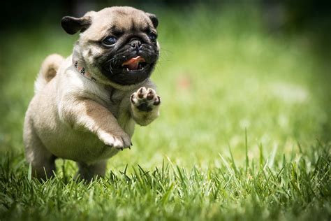 puppy background puppy backgrounds 68