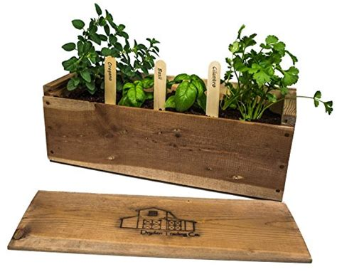 Parsley Mini Garden Kit indoor herb garden planter box kit with basil cilantro