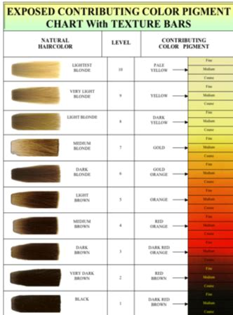 hair color levels joeselicul hair color chart