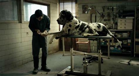 se filmer dogman casting canino de dogman conquista a palm dog de cannes
