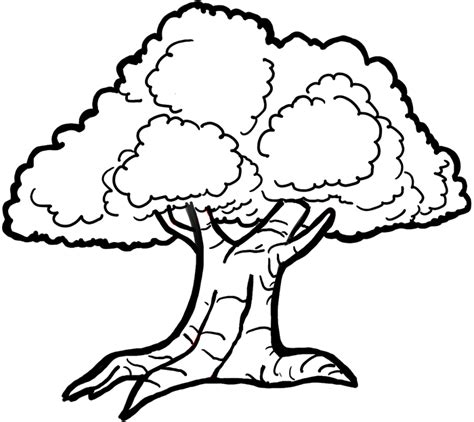 easy tree to draw how to draw trees with easy step by step drawing