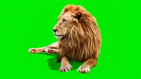 best for green screen best green screen link