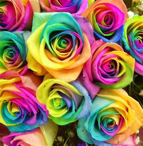 Buy Roses by Flowersdirect News And Upcoming Events Flowers