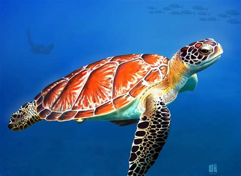 sea turtle digital painting for manon 3000 views flickr