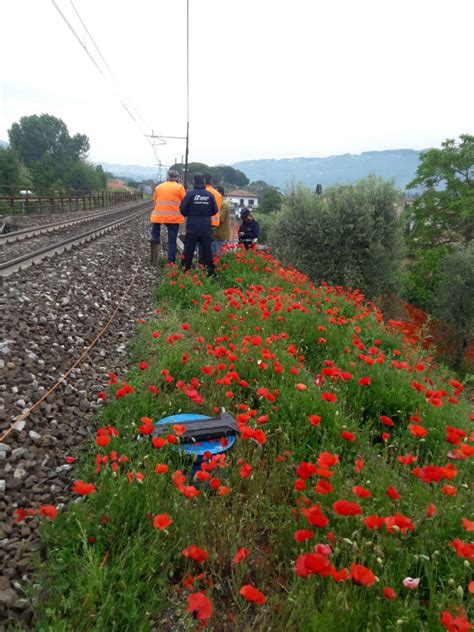 Lu Fi treno urta escavatore sulla linea fi lu vg circolazione