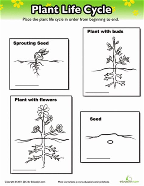 cycle of plants and animals worksheets plant cycle worksheet education