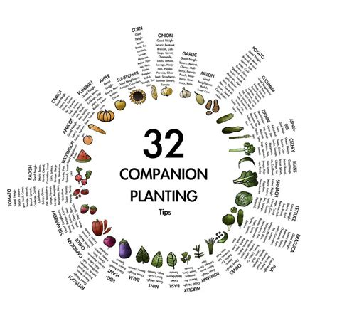 Companion Planting Growyourgrub Companion Gardening Layout