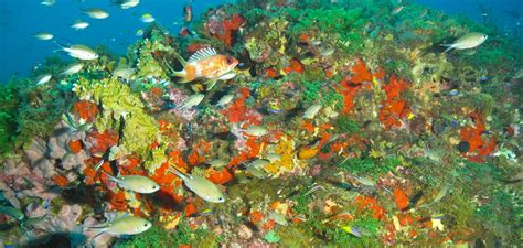 Flower Gardens National Marine Sanctuary Noaa To Expand Flower Garden Banks Marine Sanctuary In Gom Subsea World News