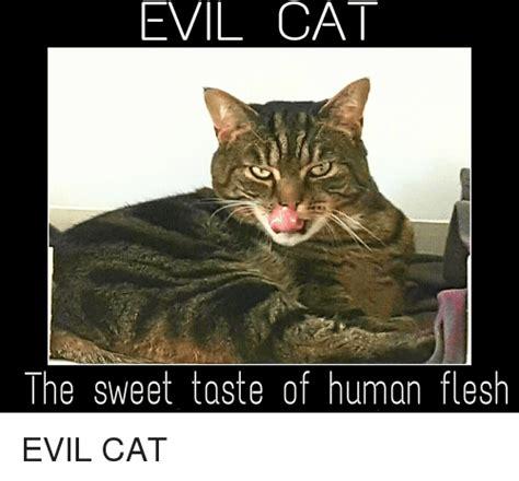 Evil Cat Meme - evil cat meme good www imgkid com the image kid has it