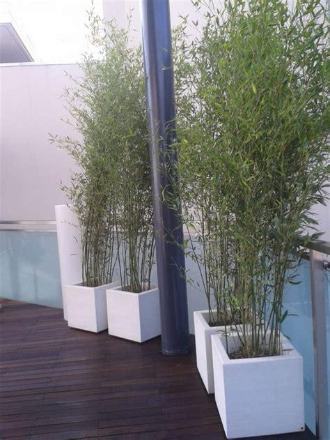 bamboo in vaso crea il verde bergamo allestimento chiese terrazzi e