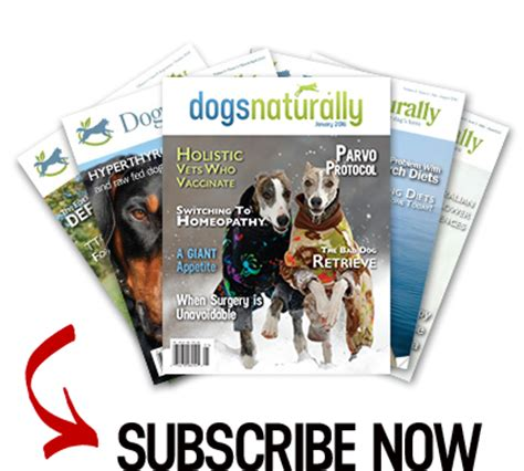 dogs naturally magazine pumpkin seeds a solution for worms dogs naturally magazine