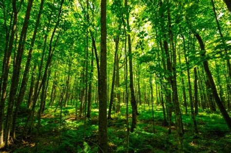 kumpulan berbagai gambar hutan  asri