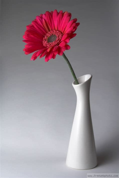 Flowers In Vases by Flowers In A Vase Pictures Beautiful Flowers