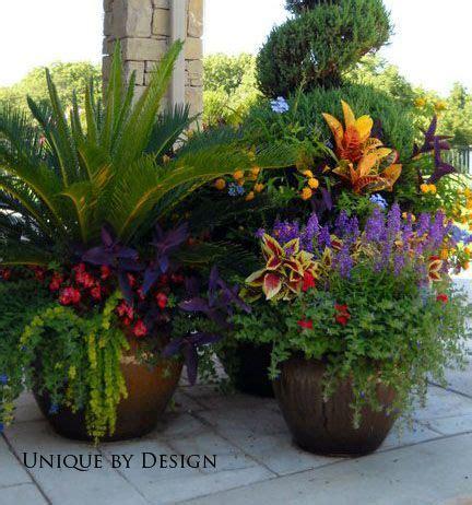 best 25 potted plants patio ideas on pinterest