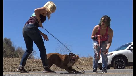 build pit stranded pit bull stranded in a rescued by a for paw doovi