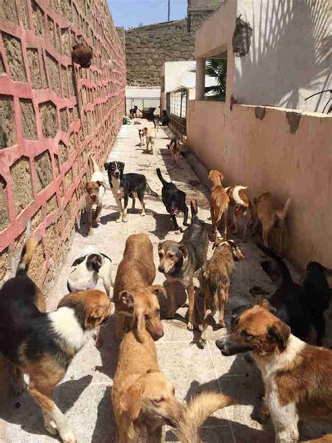 strayxand8dogs stray x and 8 dogs httpanimalnewsflash blogspot the view from fez tangier tackles stray dog problem