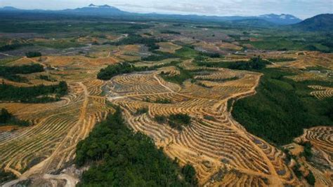 Feed Indonesia fonterra pke supplier banned after forest fires dairy