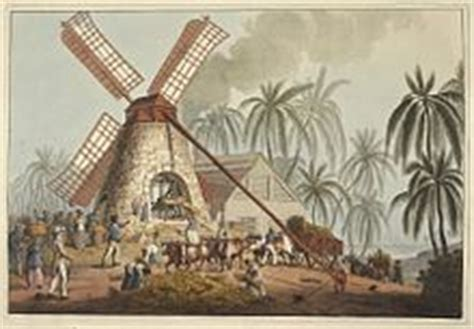 Sugar plantations in the Caribbean   Wikipedia