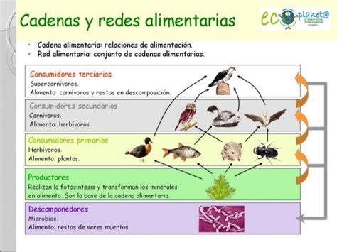 cadenas y redes troficas o alimentarias ecosistemas cadenas y redes alimentarias icvc