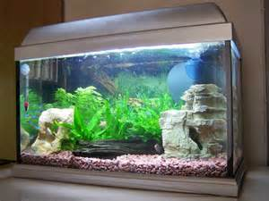 Betta Decorations Tropical Fish Tanks Page 22
