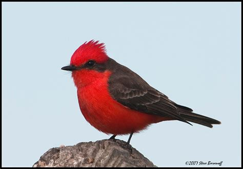 wild birds unlimited common tucson birds oro valley az