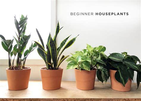 easy house plants easy house plants house plan 2017