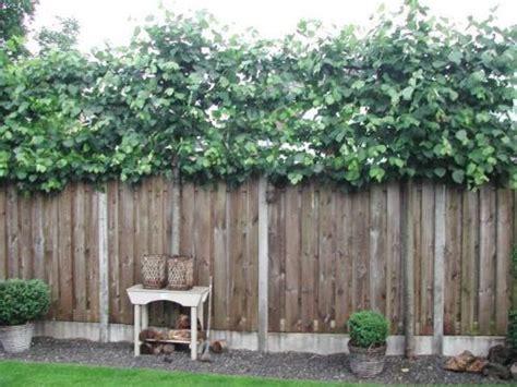 immergrüne pflanzen als sichtschutz 841 leibeuk garden sichtschutz z 228 une und g 228 rten