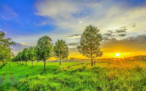 imagenes jpg wallpaper hd golden sunset on the green field wallpaper download