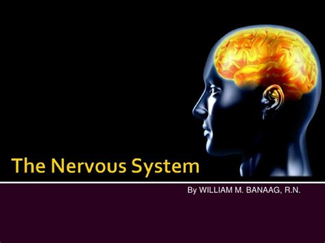 powerpoint templates free nervous system the nervous system slide show