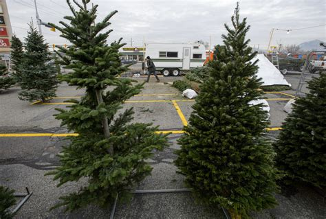 best seattle tree lot northwest tree shortage leads to conundrum in utah the seattle times