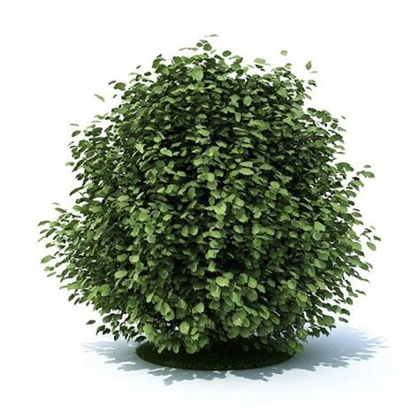 green leaf shrub cgtrader