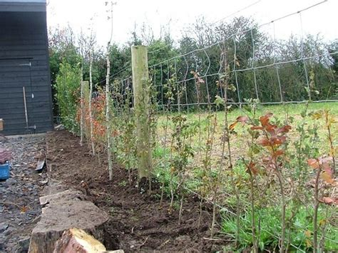 siepi da giardino sempreverdi siepe sempreverde da giardino siepi siepi da giardino