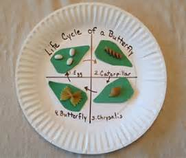 butterfly life cycle plate craft scholastic com
