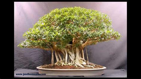 bonsai masterclass all you need 0806967633 bonsai beauty youtube