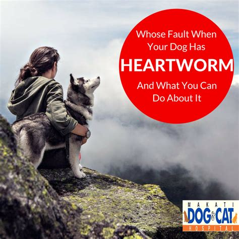 what does it when you about dogs heartworm prevention whose fault when your has heartworms and what you can do