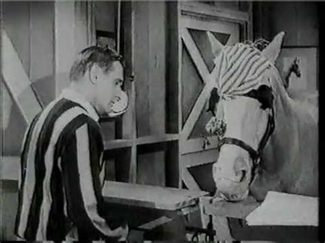 theme song mr ed 17 best images about mr ed on pinterest palomino