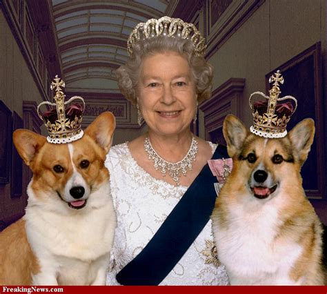 Queen Elizabeth Corgi | reinvention the journal of a dog lover book reader